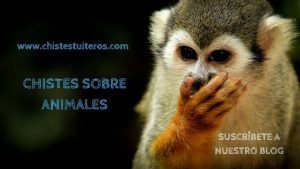 """Chistes buenos de animales<span class=""""wtr-time-wrap after-title""""><span class=""""wtr-time-number"""">1</span> minutos de lectura</span>"""