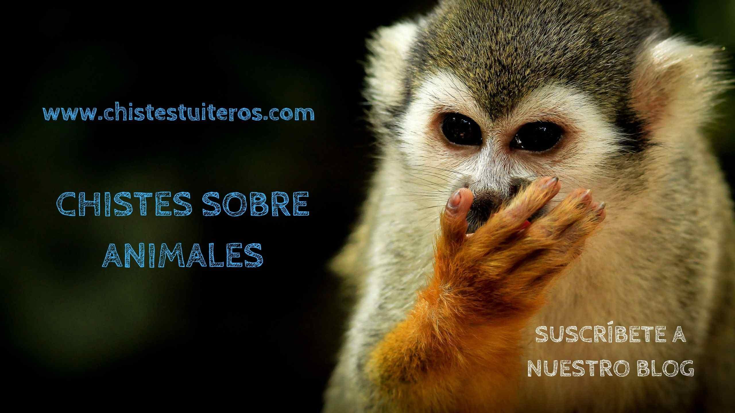 """Chistes buenos de animales<span class=""""wtr-time-wrap after-title""""><span class=""""wtr-time-number"""">5</span> minutos de lectura</span>"""