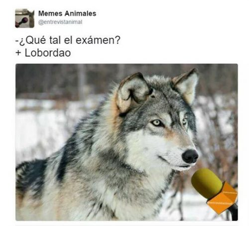 Lobo - Chistes sobre animales