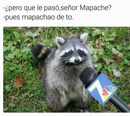 Mapache - Chistes sobre animales
