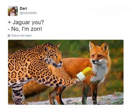 jaguar you - Chistes sobre animales